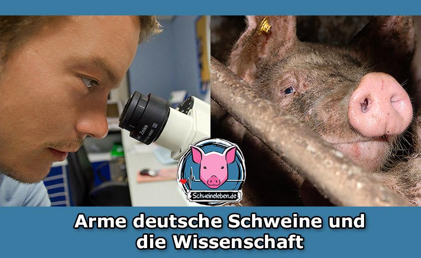 Die armen Schweine und Deutsche Wissenschaftler