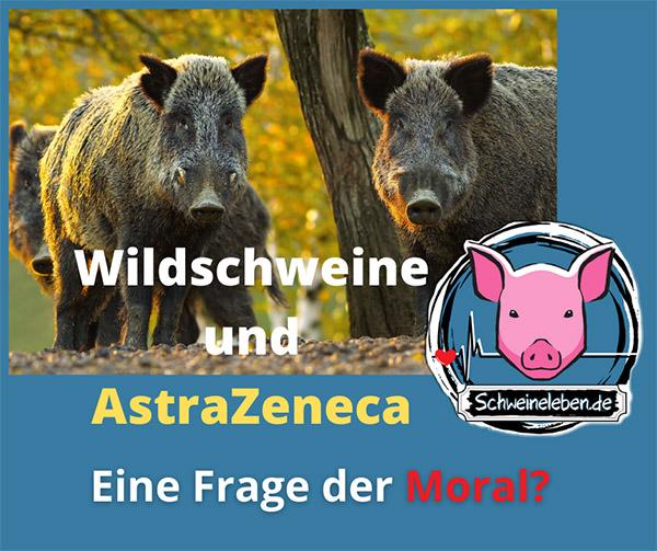 Wildschweine und AstraZeneca