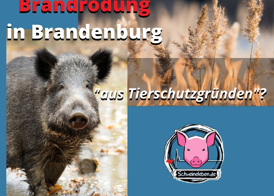 Brandrodung für den Schweinefleisch-Export