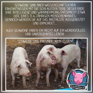 Schweinische Statements