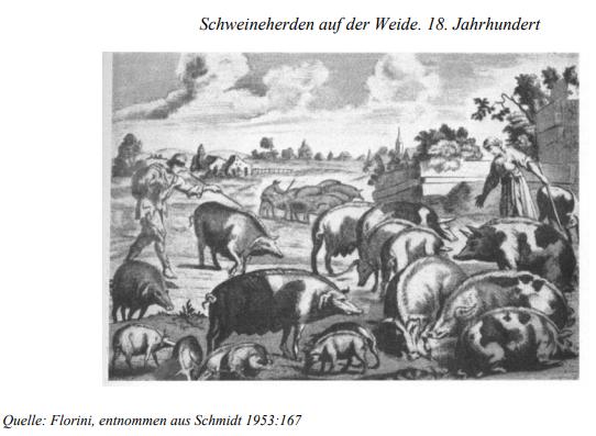 Schweineherde im 18. Jahrhundert