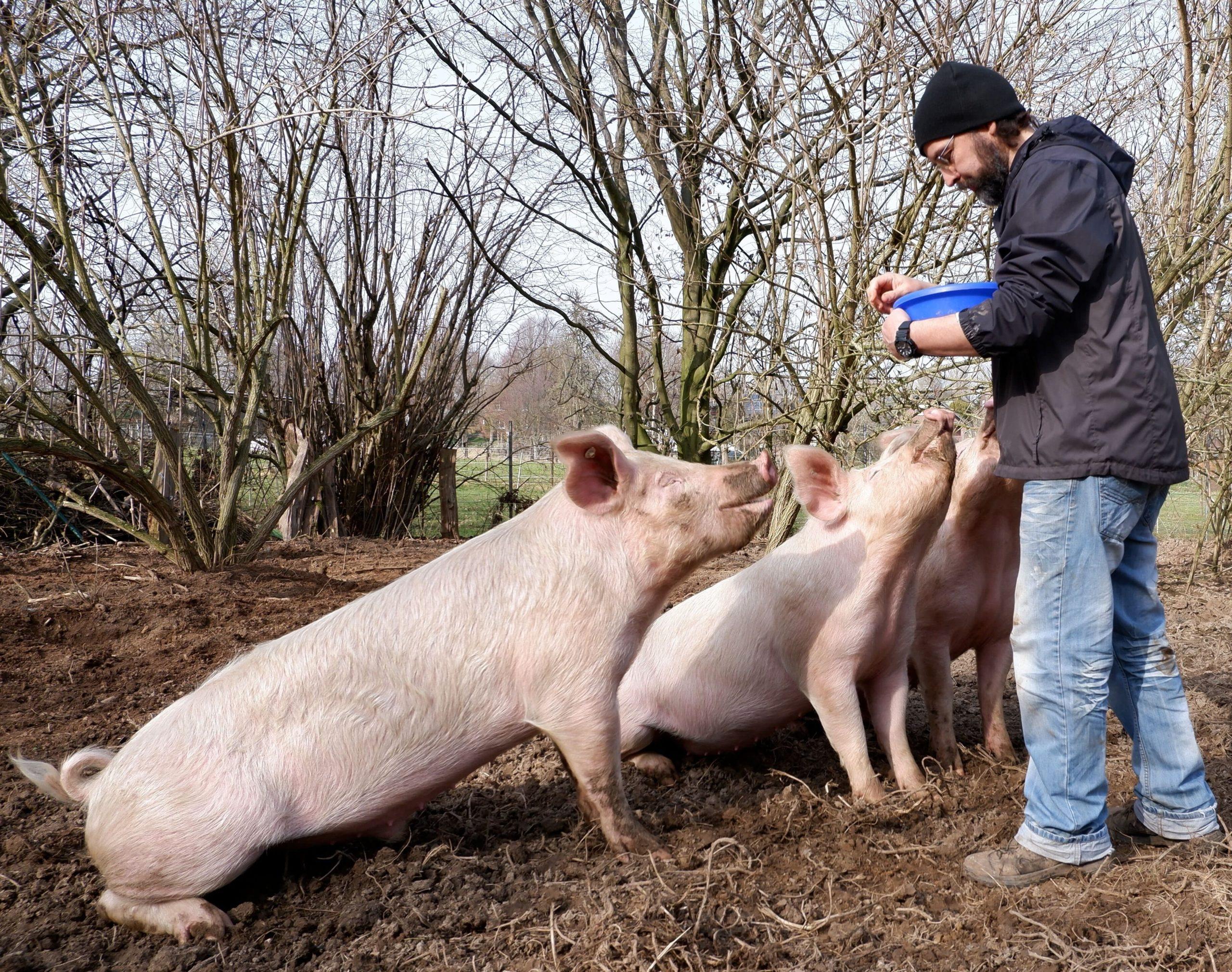 Schweine und Jörg