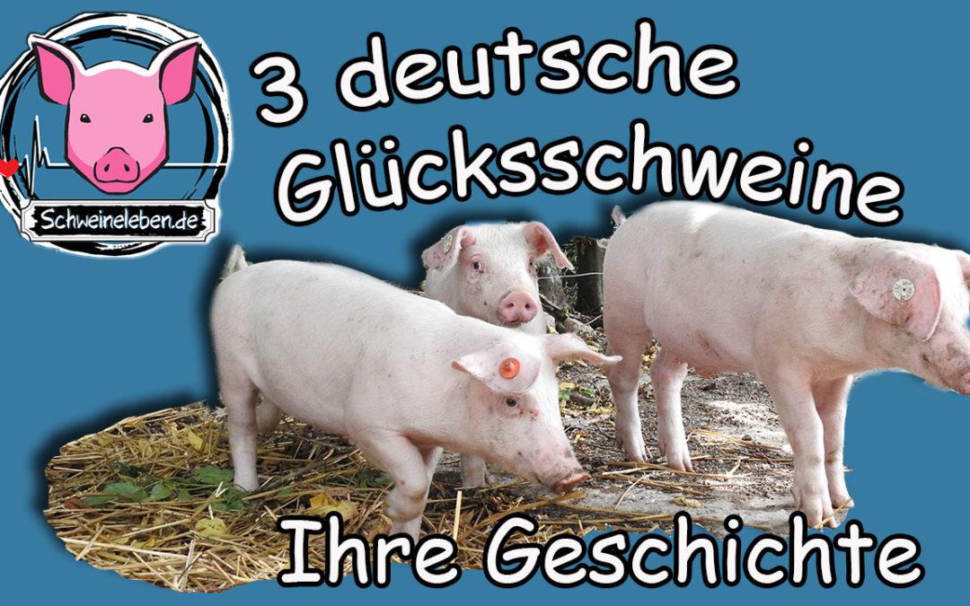 3 deutsche Glücksschweine