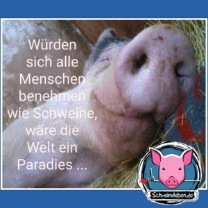 Würden sich alle Menschen wie Schweine benehmen