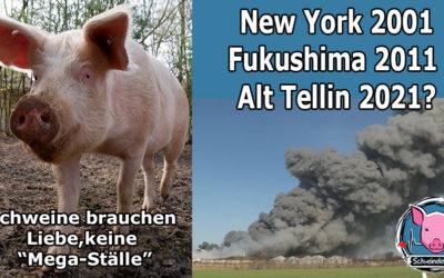 New York, Fukushima, jetzt Alt Tellin – Aber sind doch nur Schweine, oder?