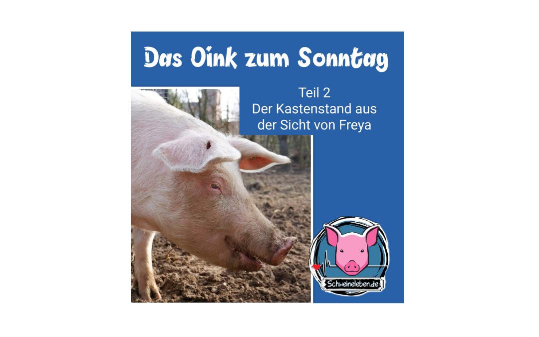 Das Oink zum Sonntag - Freya und der Kastenstand