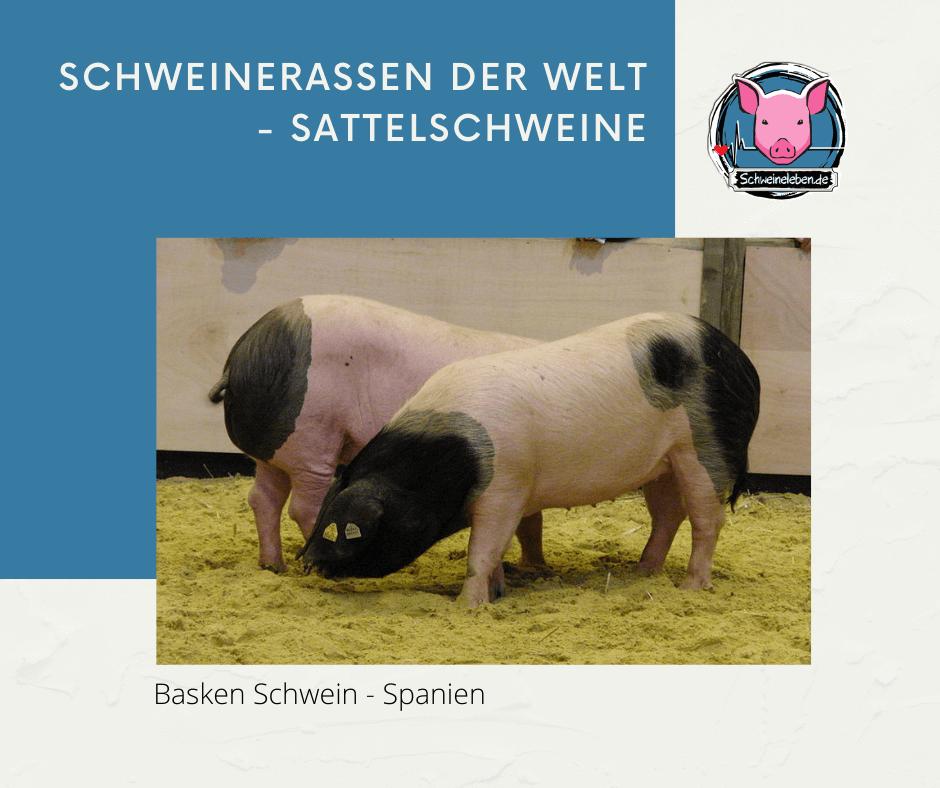 Basken Schwein