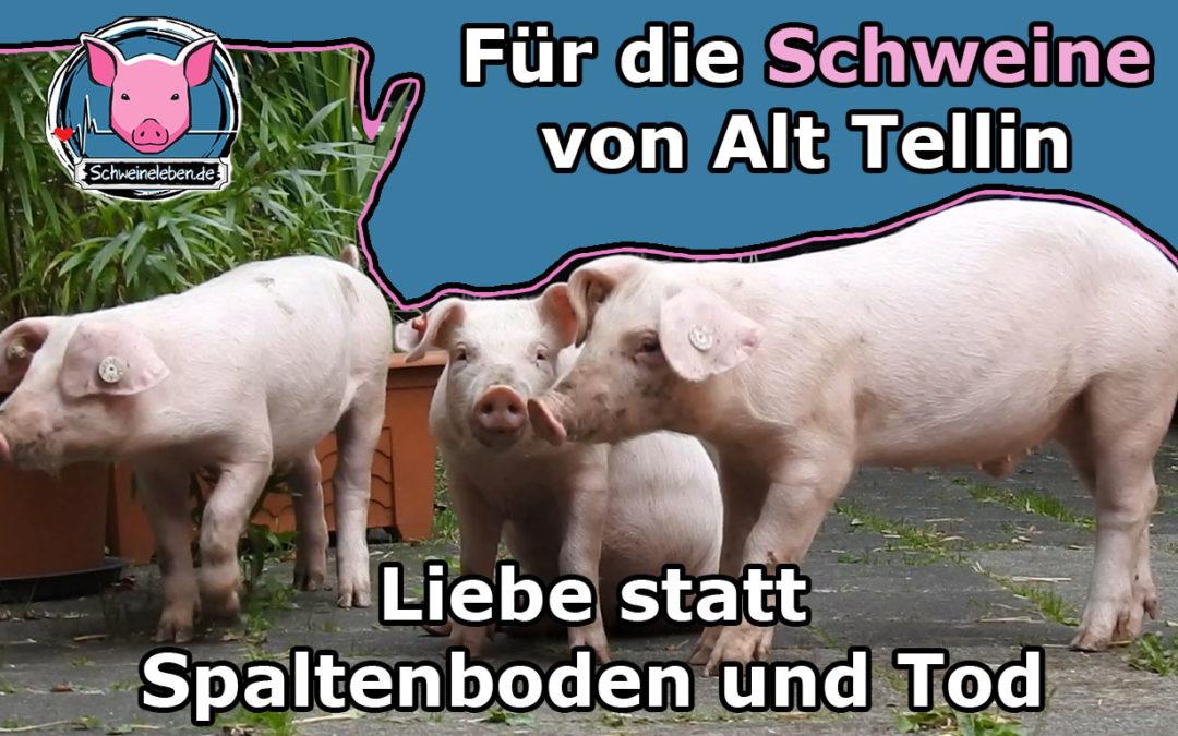 3 gerettete Ferkel aus einer deutschen Schweinezucht