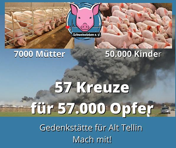 Kreuzzug für die Schweine von Alt Tellin
