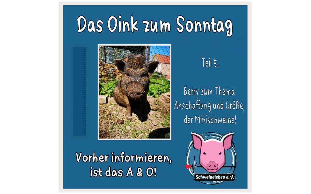 Das Oink zum Sonntag - Berry über Anschaffung und Größe von Minischweinen