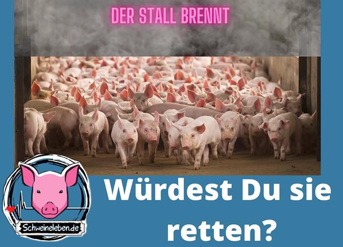 Brennende Schweine – würdest Du sie retten?