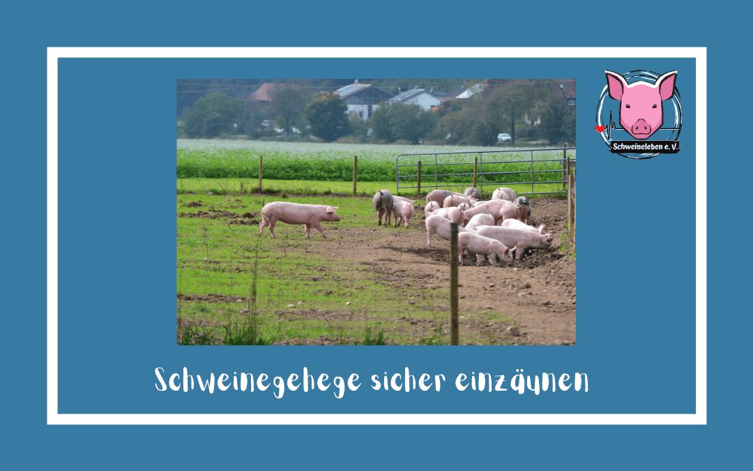 Schweine als Heimtiere – Einzäunung des Geheges