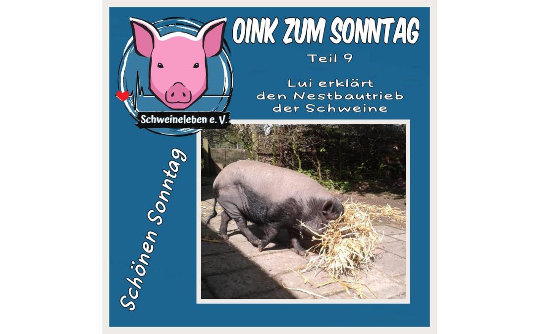 Das Oink zum Sonntag (Teil 9) – Lui und der Nestbautrieb (von Kerstin Hinrichs)
