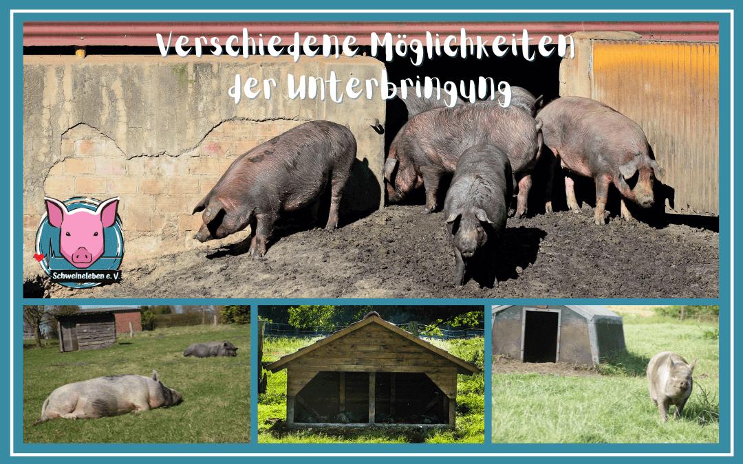Schweine als Heimtiere - Der Stall