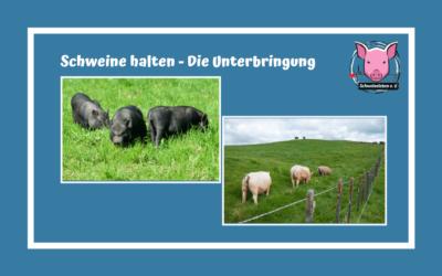 Schweine als Heimtiere – Die Unterbringung