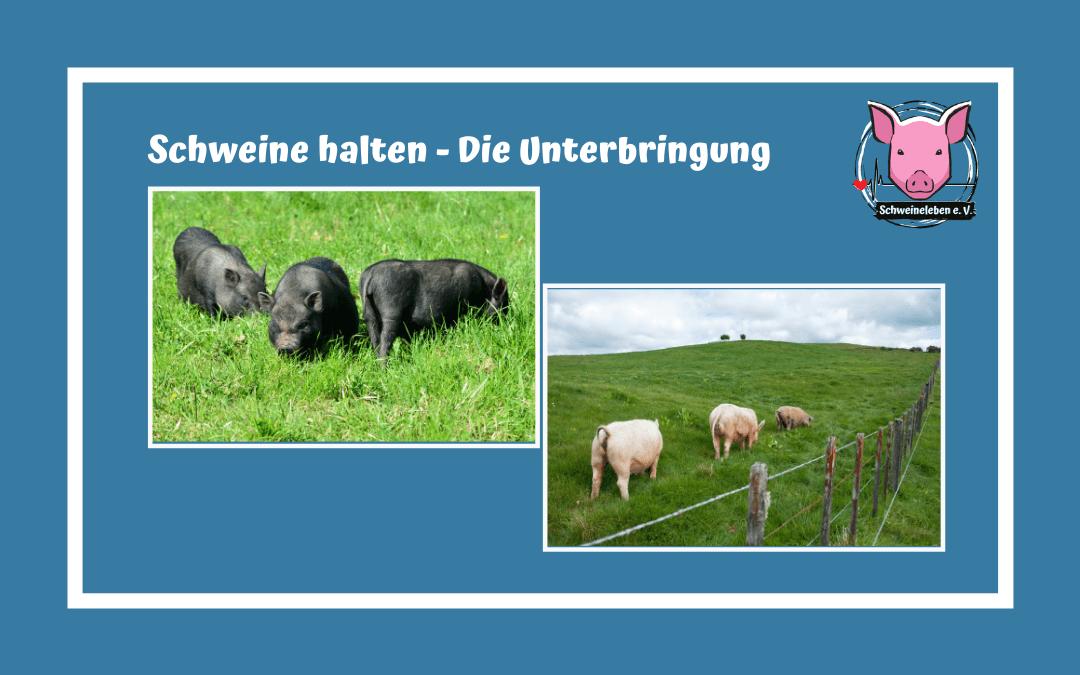 Schweine halten - Die Unterbringung