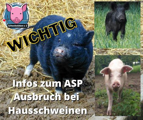 Wichtige Infos zur Afrikanischen Schweinepest (ASP) bei Hausschweinen