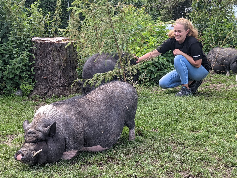 Dany Brandl und die Minischweine