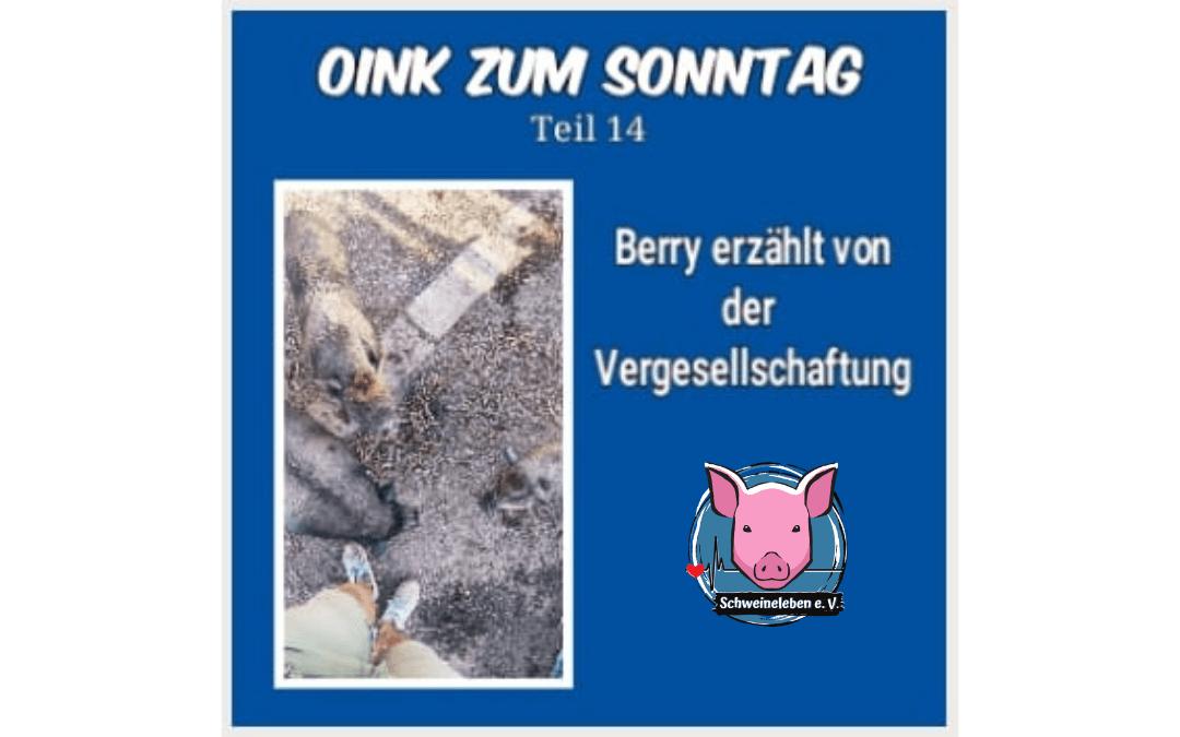 Das Oink zum Sonntag (Teil 14) – Die Vergesellschaftung (von Natascha Leistikow)