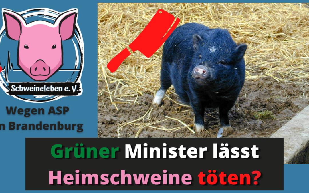 """Afrikanische Schweinepest: Die Tierquäler-Industrie ruft und die Politik steht """"bei Fuß""""!"""