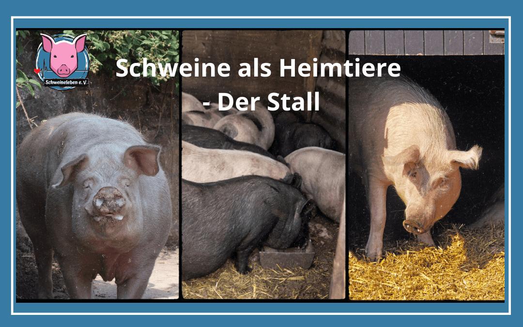 Schweine als Heimtiere – Der Stall
