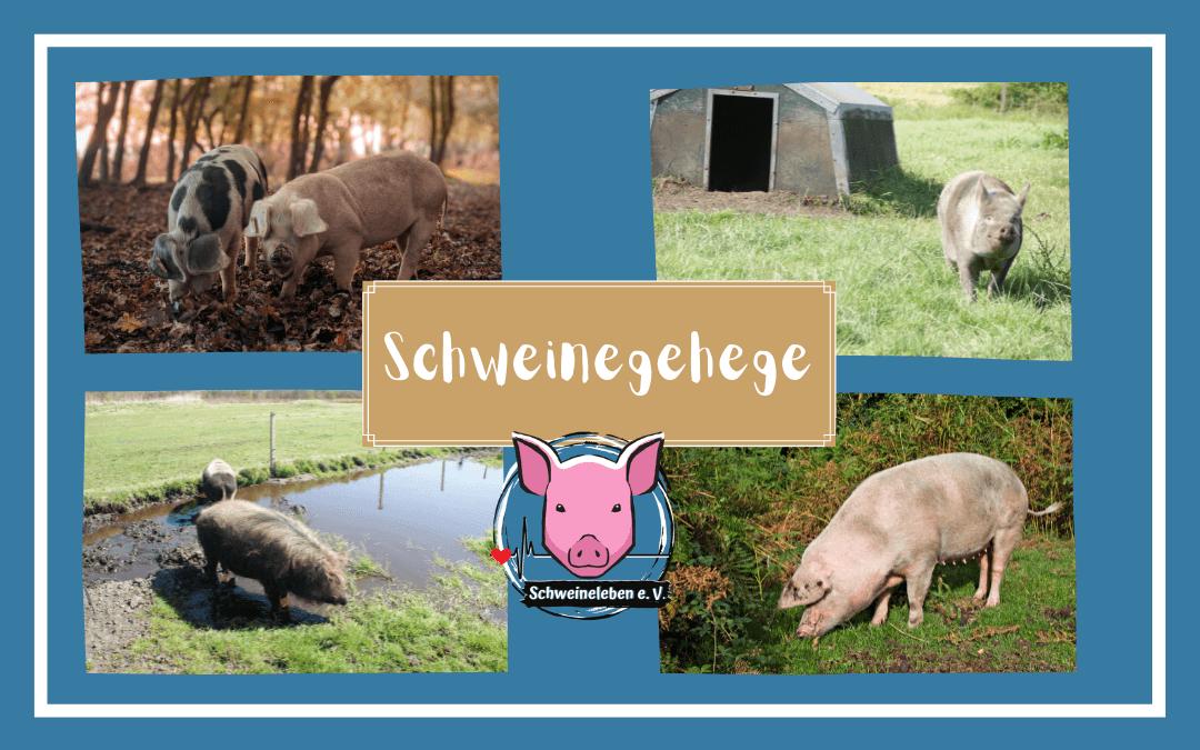 Schweine als Heimtiere – Das Schweinegehege