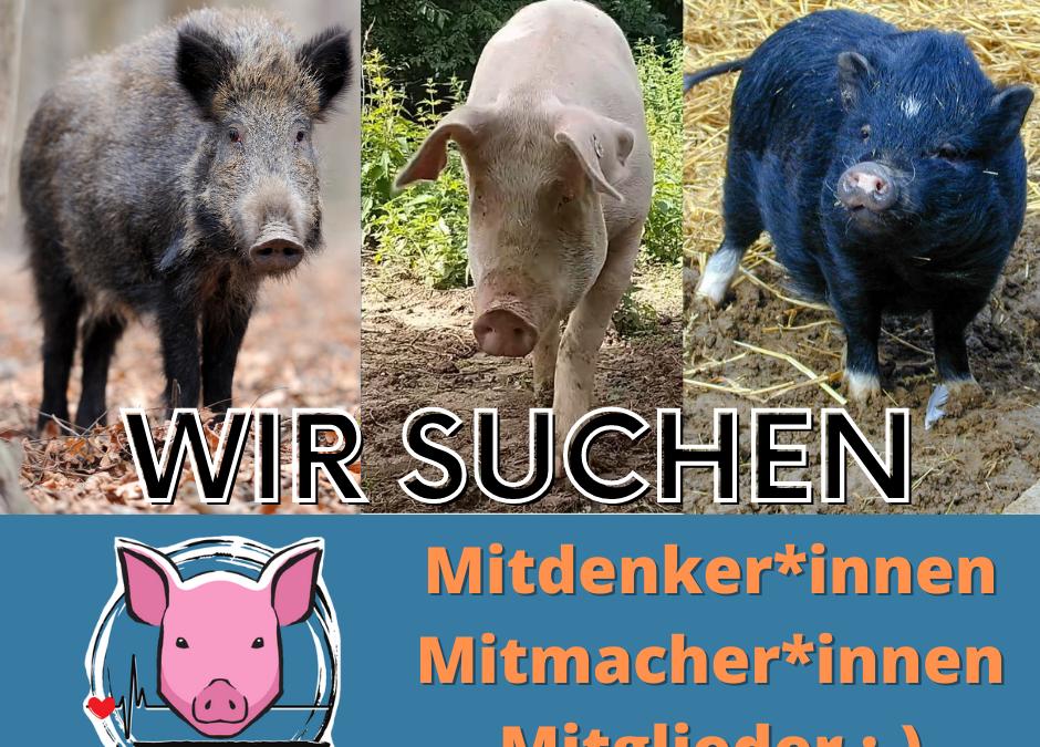 Schweineleben e. V. sucht: Dich!