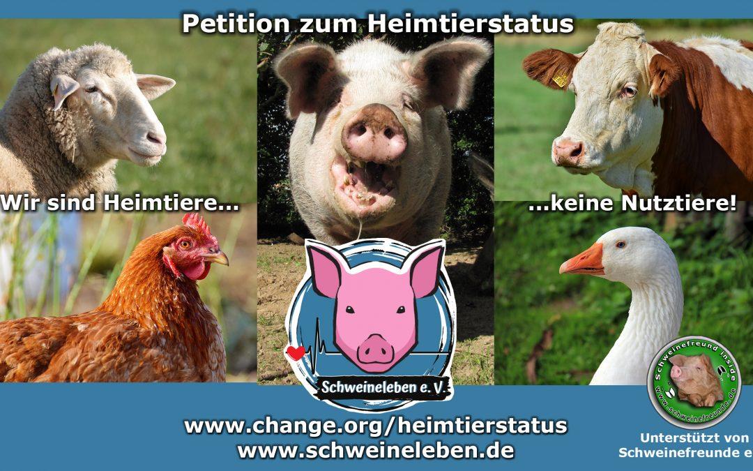 Die Afrikanische Schweinepest und unsere Petition zum Heimtierstatus