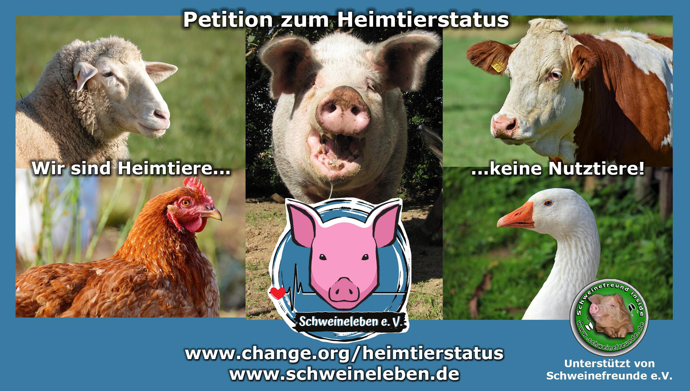 Schweine als Heimtiere - unsere Petition