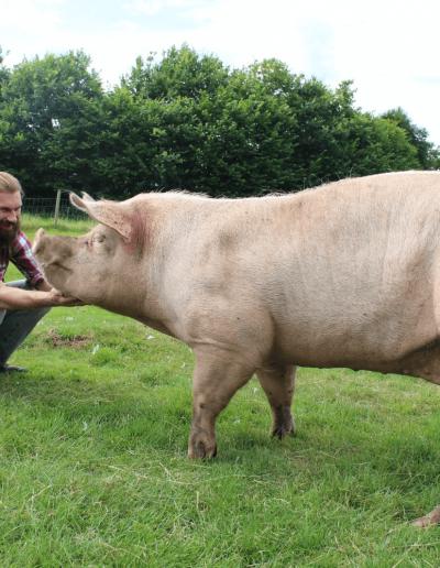 Robert bei Großschwein Rosalie