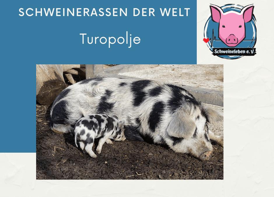 Schweinerassen der Welt – Turopolje