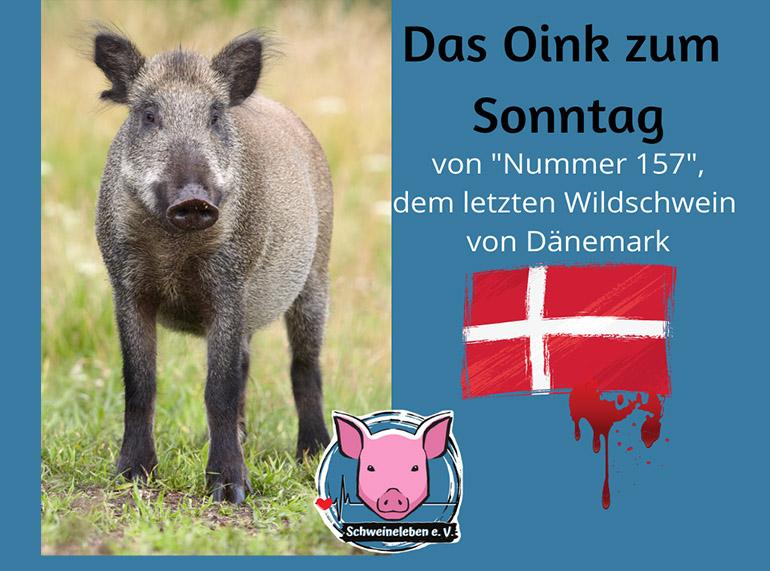 Das letzte Dänische Wildschwein – Oink zum Sonntag