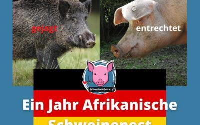 Ein Jahr Afrikanische Schweinepest in Deutschland