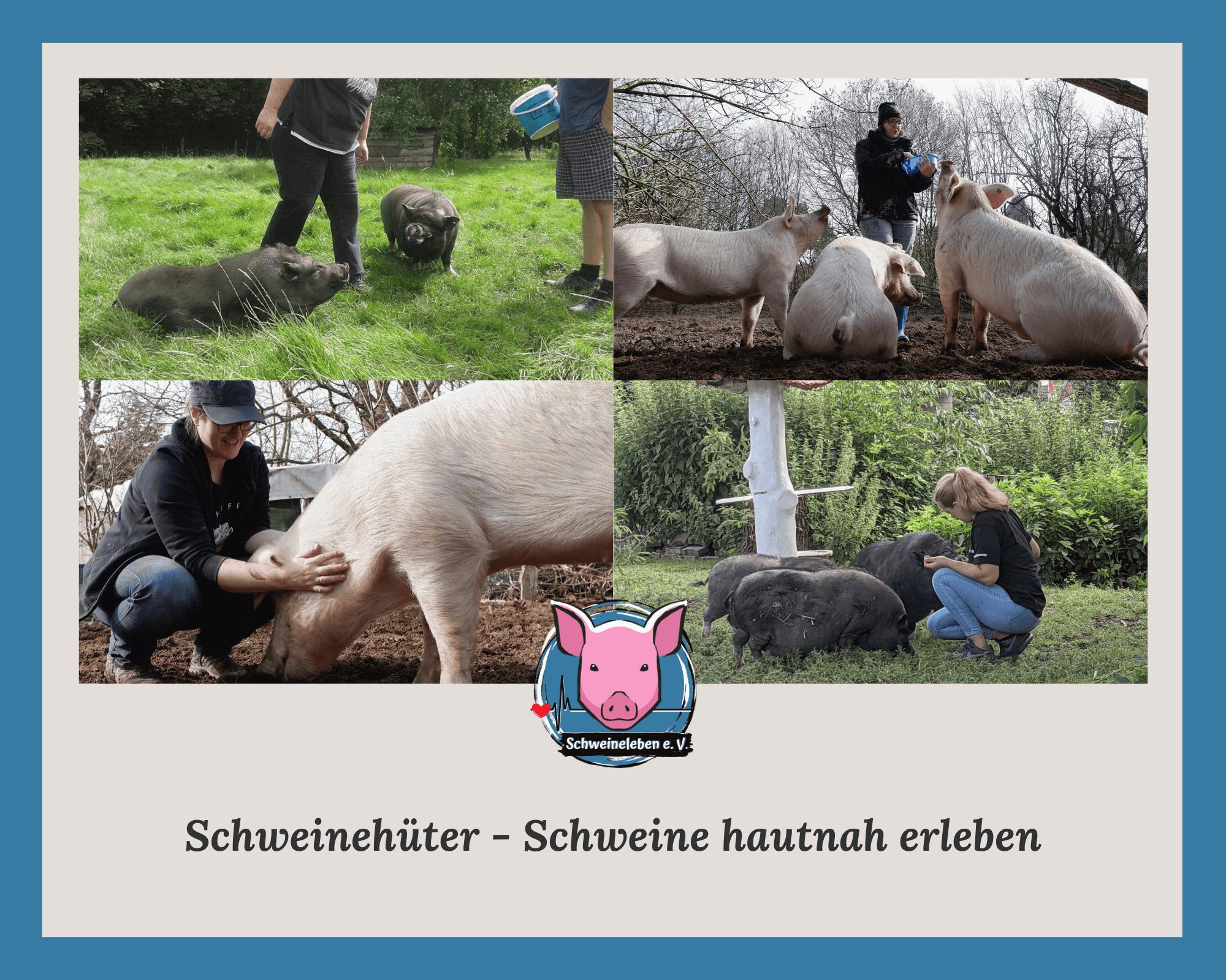 Schweine erleben - Schweinehüter
