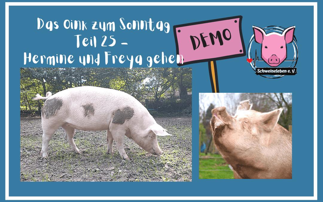 Das Oink zum Sonntag (Teil 25) – Hermine und Freya gehen DEMO (von Sabine Kipka)