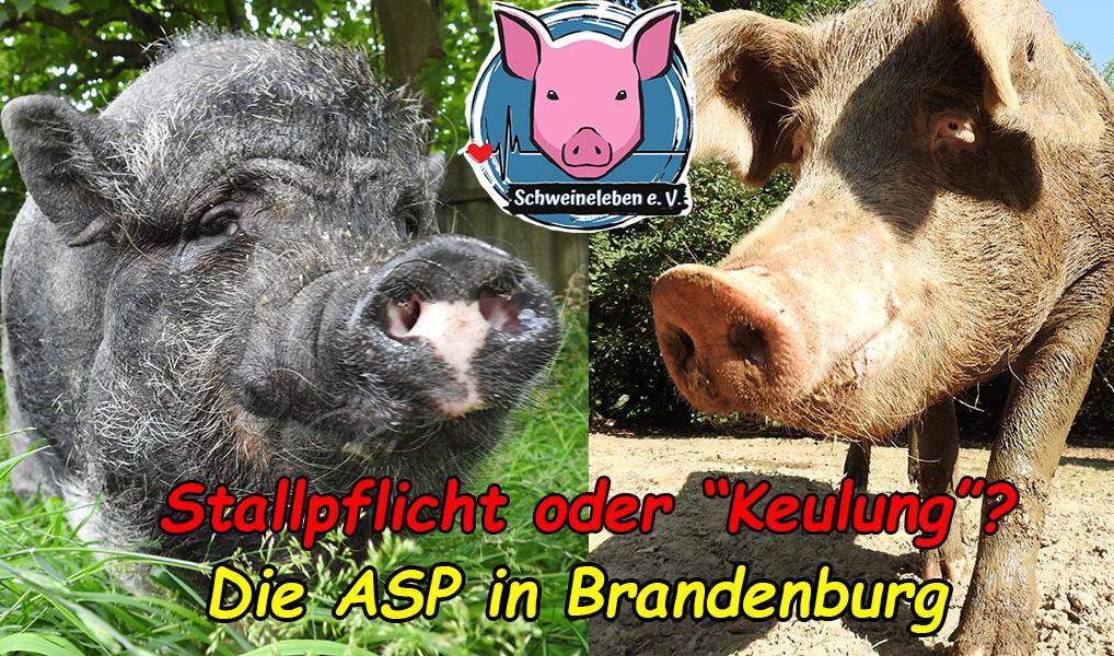 Brandenburg ist (bald?) überall…